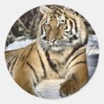 Regalos del arte de los amantes del tigre etiqueta redonda
