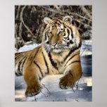 Regalos del arte de los amantes del tigre poster