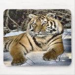 Regalos del arte de los amantes del tigre tapetes de ratón