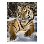 Regalos del arte de los amantes del tigre tarjetas postales
