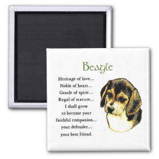 Regalos del beagle imán cuadrado