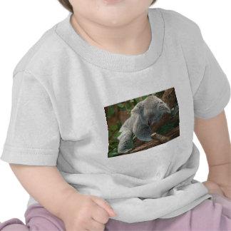 Regalos del destino de los animales del amor de lo camisetas