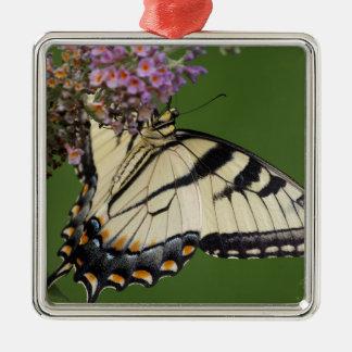 Regalos del este de la mariposa de Swallowtail del Adorno Navideño Cuadrado De Metal