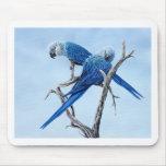 Regalos del Macaw de Spix para el amante de Spix