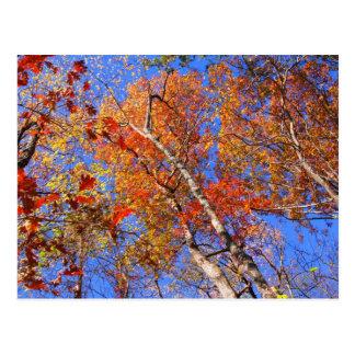 Regalos del oeste del parque nacional de las aguas tarjeta postal