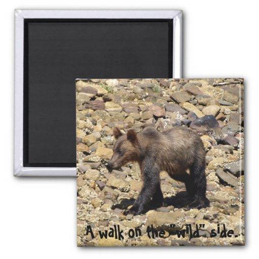 Regalos del oso grizzly imán cuadrado