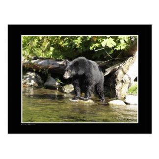 """Regalos del oso negro de la """"localización de color postal"""