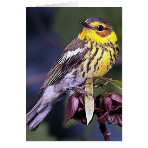 Regalos del pájaro de la curruca de Cape May Tarjeta