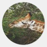 Regalos del safari de la jirafa pegatina redonda