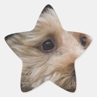 regalos divertidos del vaquero del perrito calcomanias forma de estrella