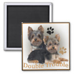 Regalos dobles del problema de Yorkshire Terrier Imanes