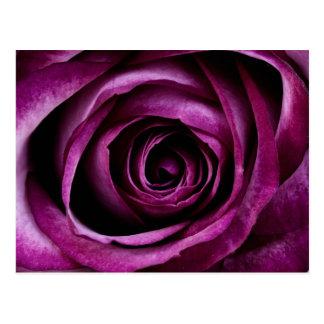 Regalos femeninos de los pétalos color de rosa púr postal