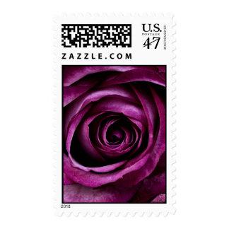 Regalos femeninos de los pétalos color de rosa sellos postales