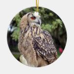 Regalos hermosos de la foto de la fauna del búho ornamente de reyes