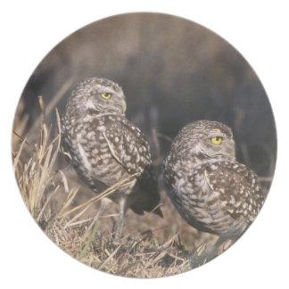 Regalos hermosos de la foto de la fauna del búho plato de cena