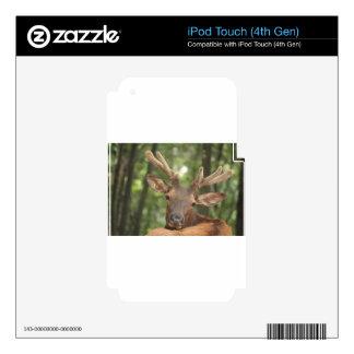 Regalos hermosos del dólar skins para iPod touch 4G