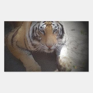 Regalos inquisitivos del tigre pegatina rectangular