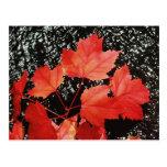 Regalos rojos del hogar del otoño de las hojas de  postales