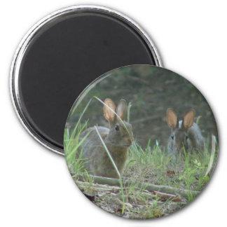 Regalos salvajes de la ropa de los pares del conej imán redondo 5 cm