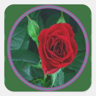 Regalos sensuales florales de la imagen 100 de la pegatina cuadrada