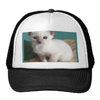Regalos siameses adorables del gatito gorro