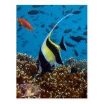 Regalos tropicales de la impresión de los pescados postales