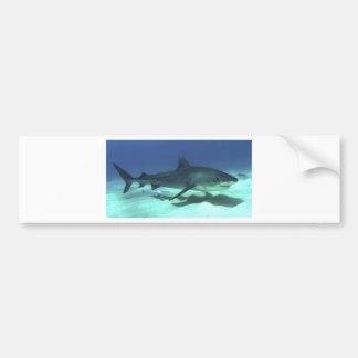 Regalos tropicales del destino del océano del océa etiqueta de parachoque