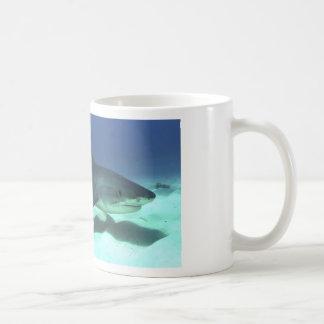 Regalos tropicales del destino del océano del océa tazas de café