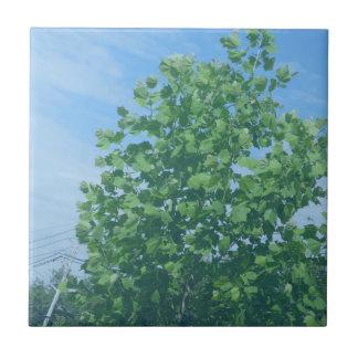REGALOS verdes F de la causa NVN674 del ambiente d Teja Ceramica