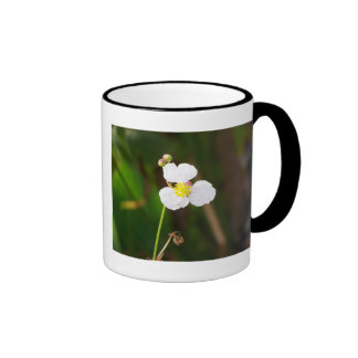 Regalos y ropa blancos de la orquídea tazas