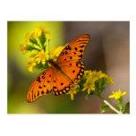 Regalos y ropa de la mariposa del golfo del postal