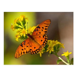 Regalos y ropa de la mariposa del golfo del tarjetas postales