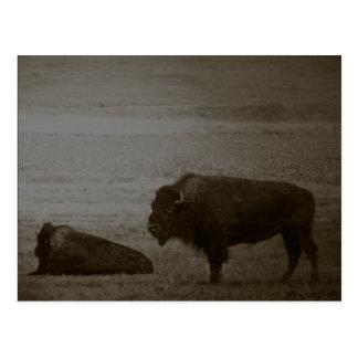 Regalos y saludos del búfalo postal