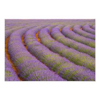 Región de Francia, Provence. Filas curvadas de Fotografía