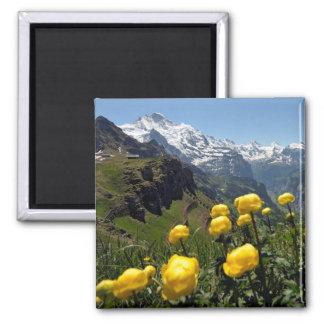 Región de Jungfrau de las flores salvajes Imán Cuadrado