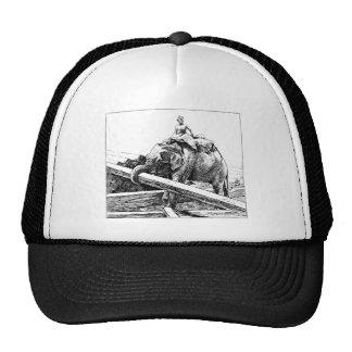 Registración del elefante gorras