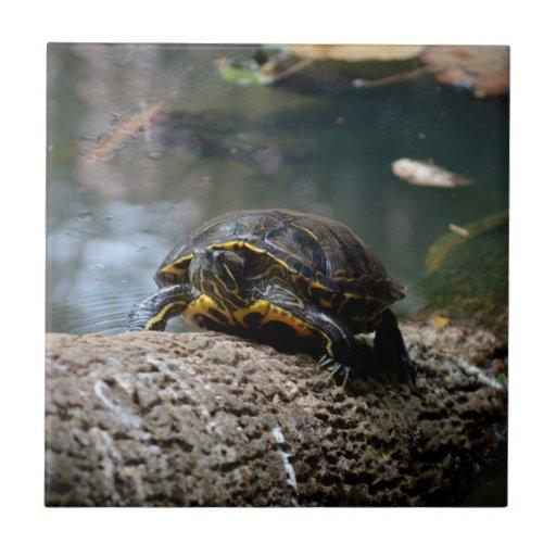 registro que sube pintado de la tortuga del agua