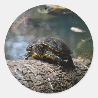 registro que sube pintado de la tortuga del agua etiqueta redonda