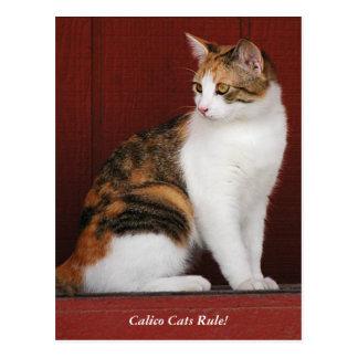¡Regla de los gatos de calicó! Postal