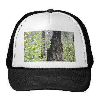 Regrowth Trucker Hat