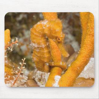 Reidi del hipocampo - Seahorse de Longsnout Alfombrilla De Raton