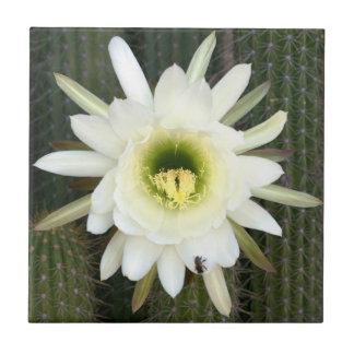 Reina de la flor del cactus de la noche, región azulejos cerámicos