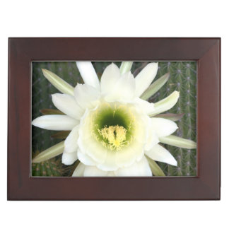 Reina de la flor del cactus de la noche, región caja de recuerdos