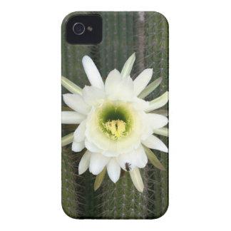Reina de la flor del cactus de la noche, región iPhone 4 Case-Mate protectores