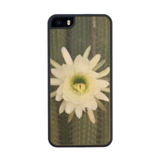 Reina de la flor del cactus de la noche, región funda de arce carved® para iPhone 5 slim