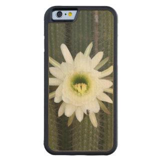 Reina de la flor del cactus de la noche, región funda de iPhone 6 bumper arce