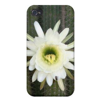Reina de la flor del cactus de la noche, región iPhone 4 protectores
