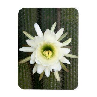 Reina de la flor del cactus de la noche, región iman de vinilo