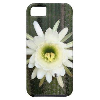 Reina de la flor del cactus de la noche, región iPhone 5 fundas