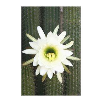 Reina de la flor del cactus de la noche, región lienzo envuelto para galerías